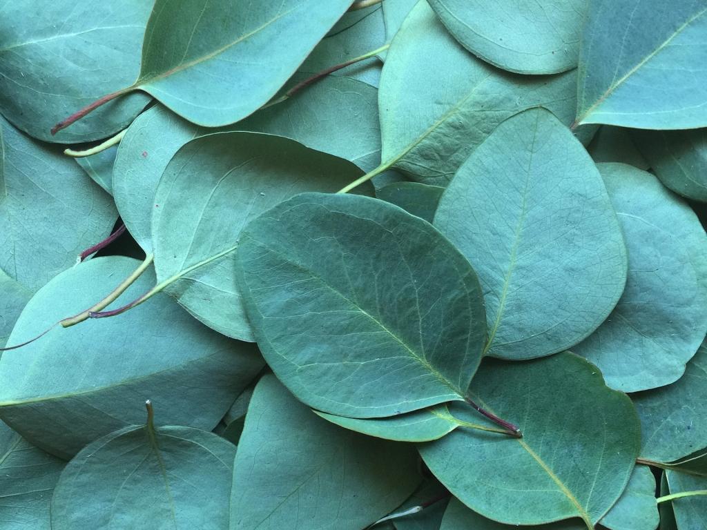 Des jeunes pousses aux bonnes feuilles.